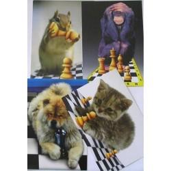 Postcards (A-35)